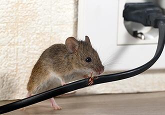 鼠・害虫防除